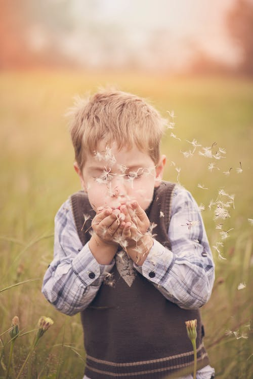 Boy Blowing Hands Filled With Dandelion Flowers