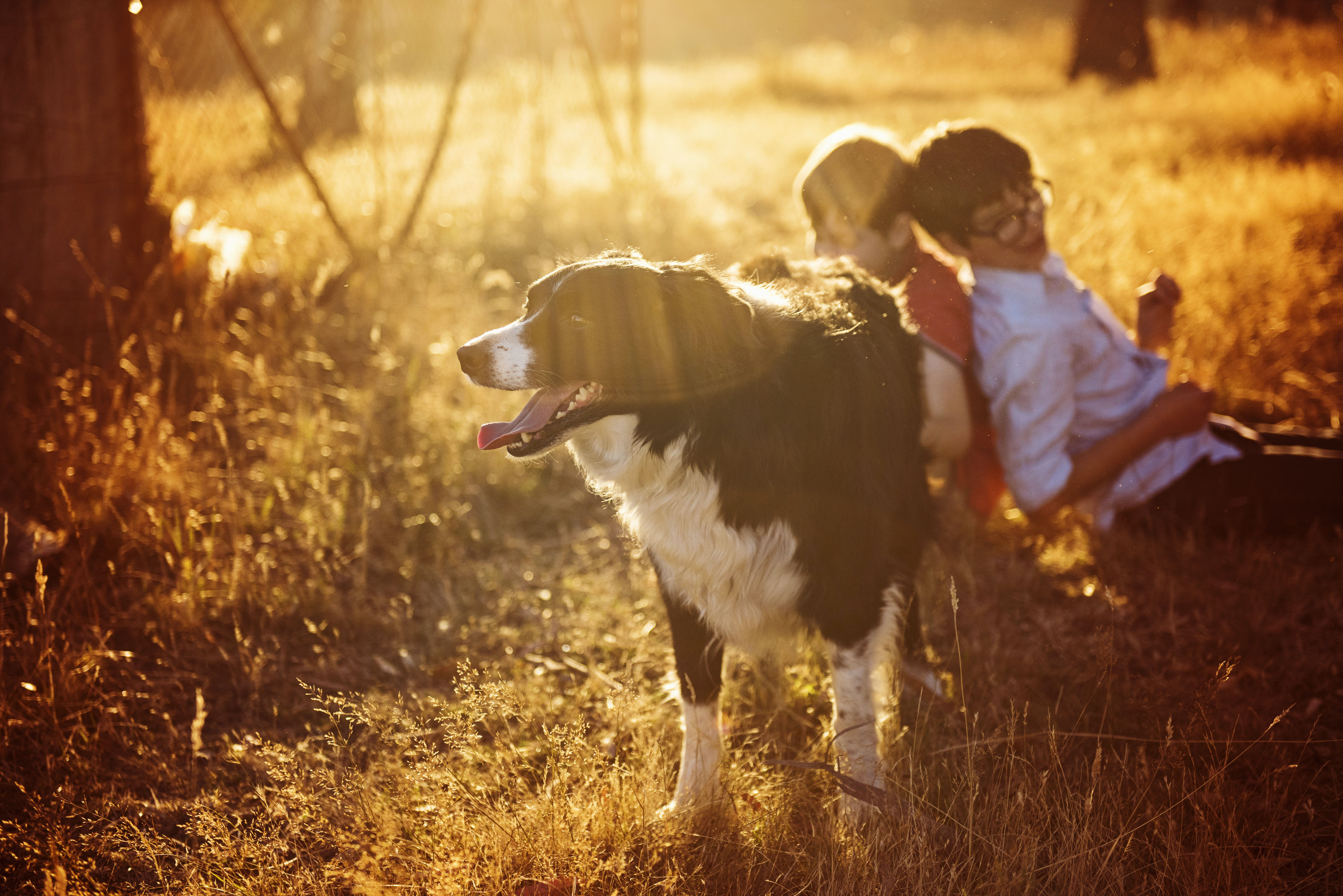 Two Boys Beside Adult Black and White Border Collie