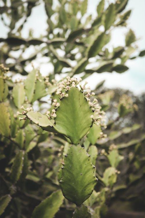 Free stock photo of cactus, cactus flower, cactus plant, growth