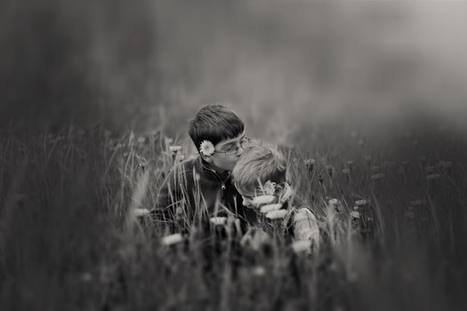 Free stock photo of love, people, field, flowers