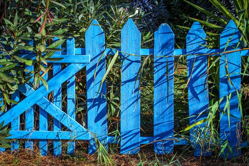 Free stock photo of blue, fence, garden