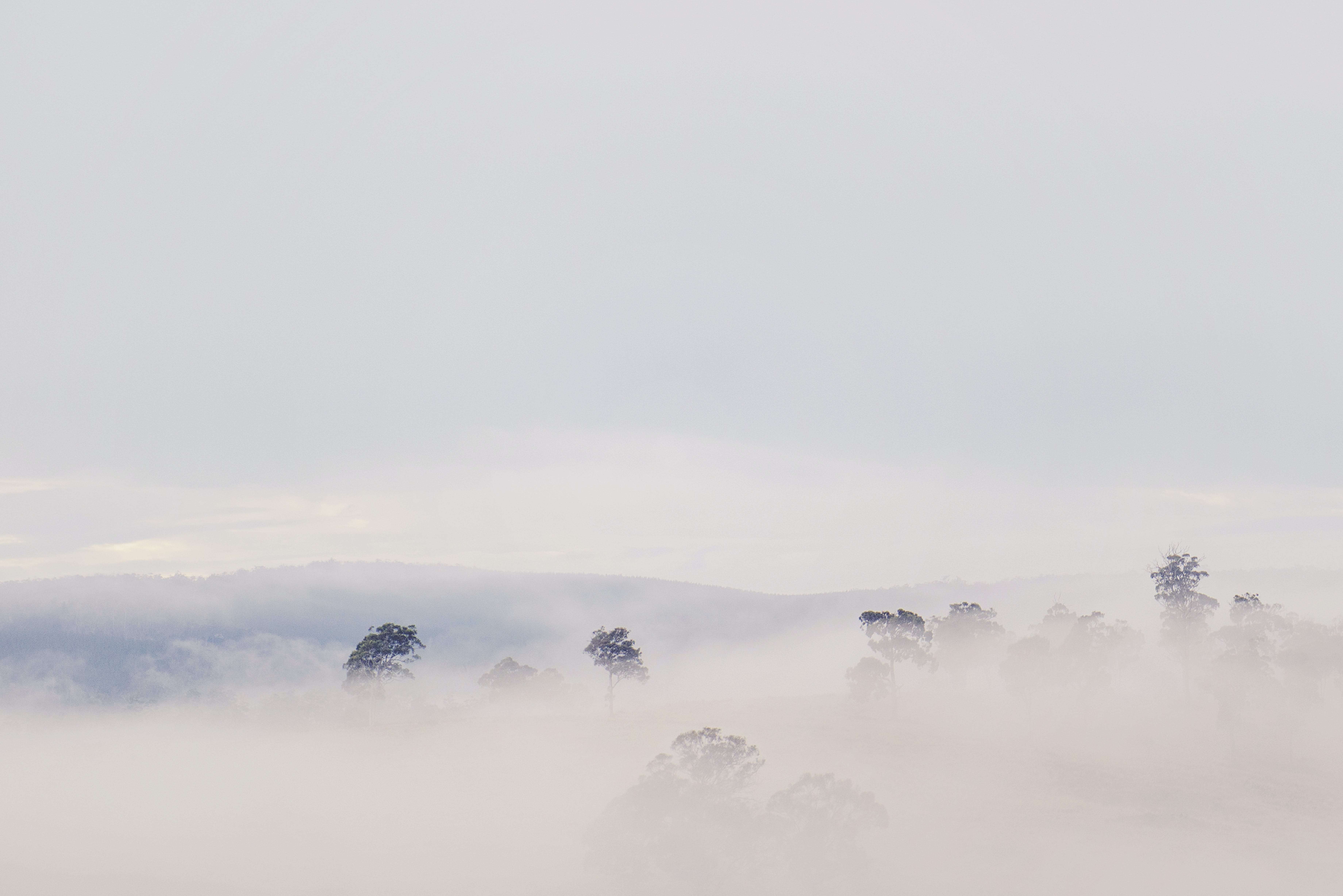 Aerial View Photography of Trees Covered by Fog