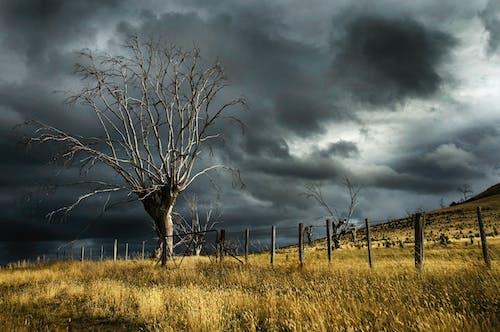 Imagine de stoc gratuită din arbori, atmosferă, câmp, copaci