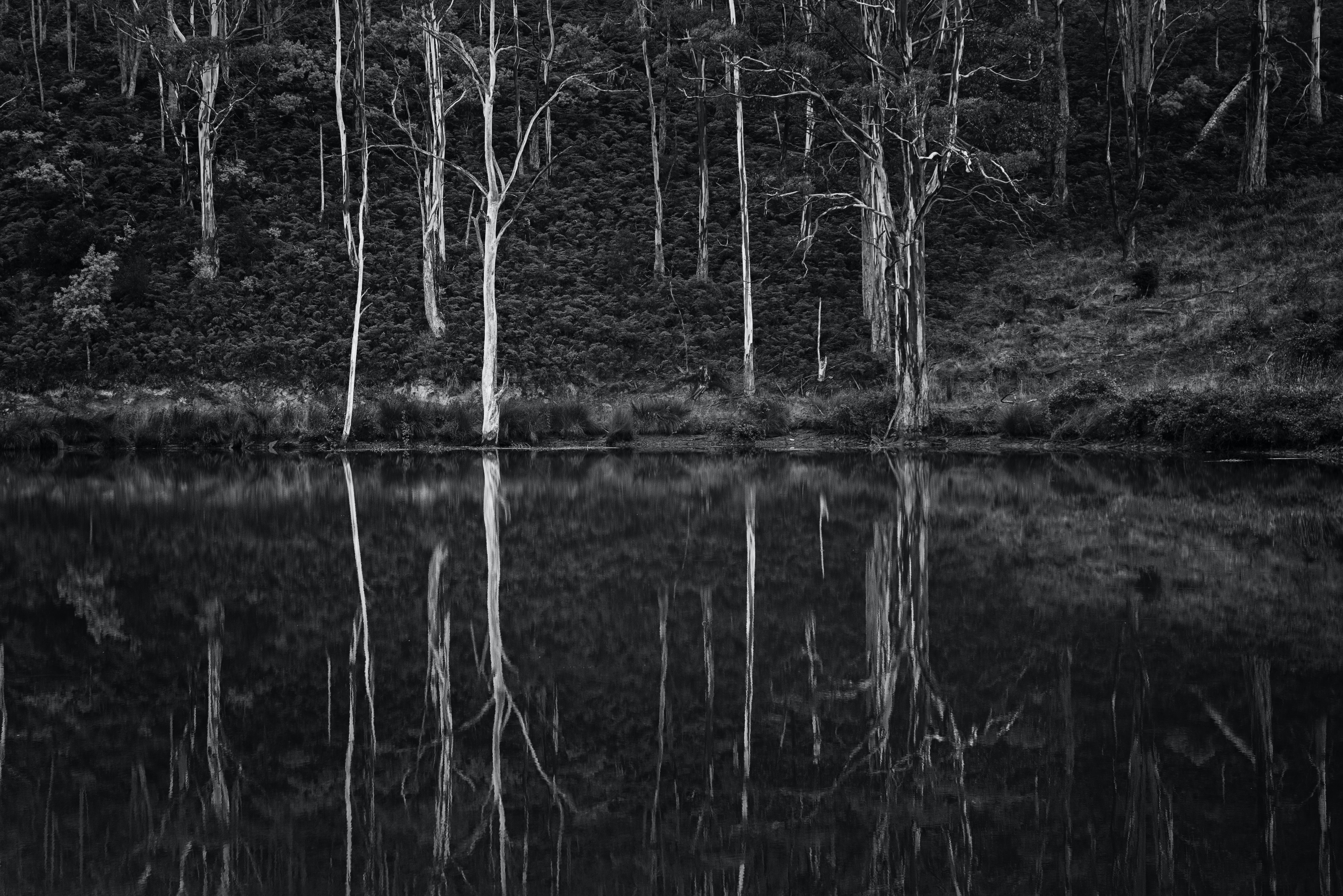 Grayscale Photo of Trees and Body of Water