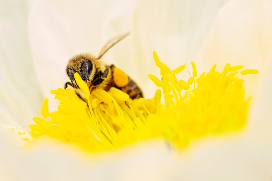 Bee blooming blossom blur