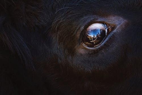 Kostnadsfri bild av däggdjur, djur, närbild, öga