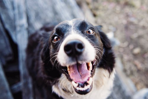 Gratis stockfoto met beest, close-up, geinig, hond