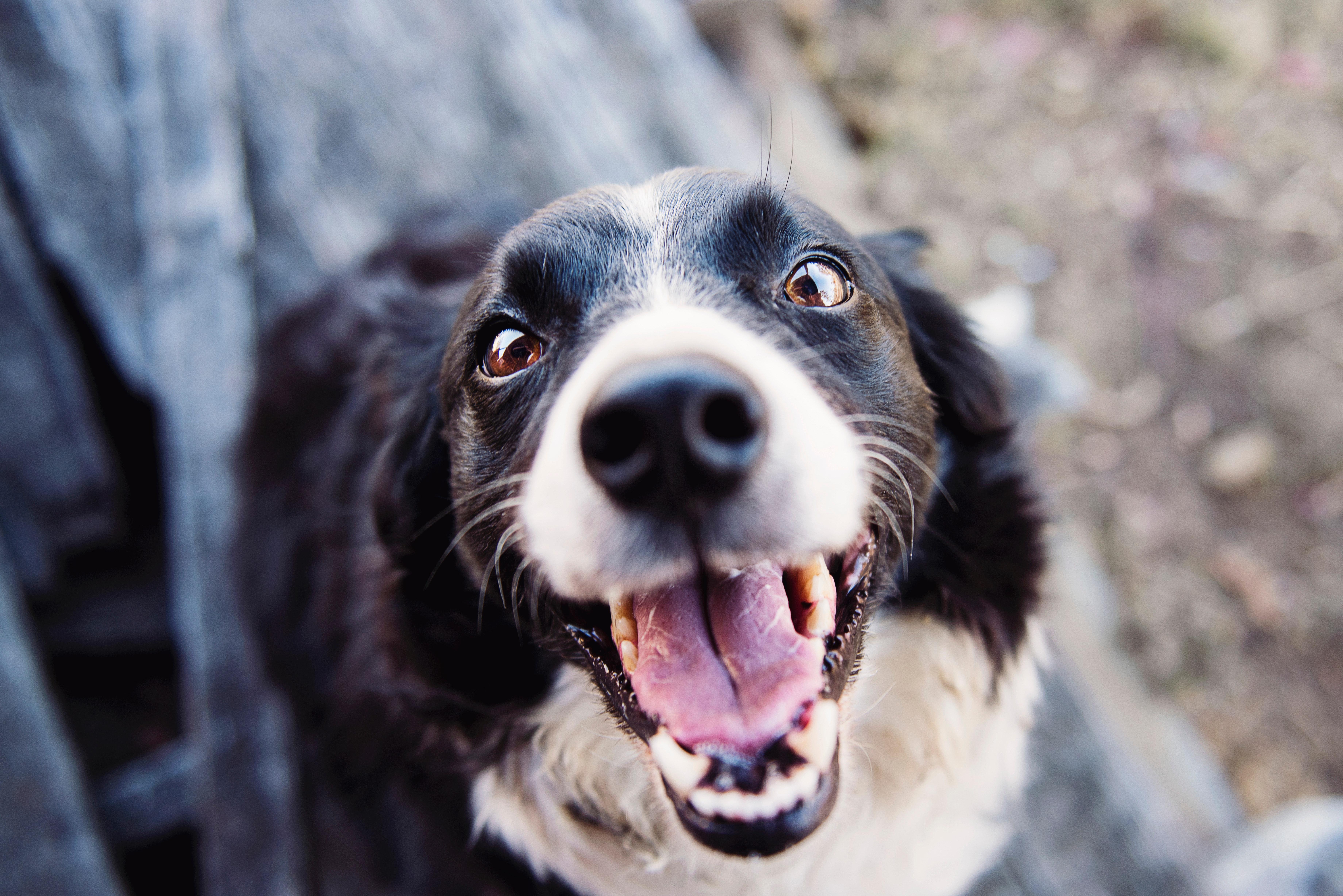Dog images · Pexels · Free Stock Photos