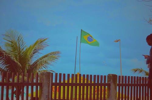 Free stock photo of brasil, brazil, brazilian