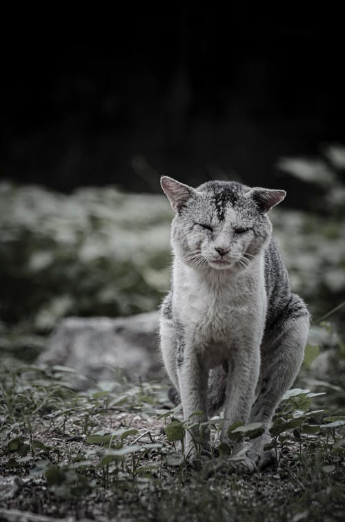 Grey and White Cat on Green Grass