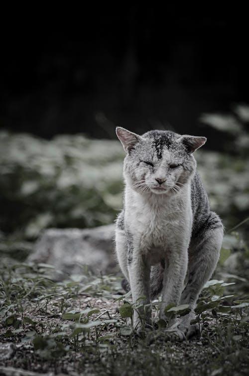 Δωρεάν στοκ φωτογραφιών με 4k ταπετσαρία, nikon, άγρια φύση, άγριος