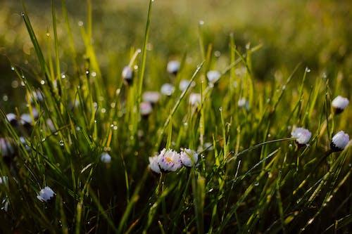 Foto d'estoc gratuïta de bri d'herba, concentrar-se, creixement, delicat