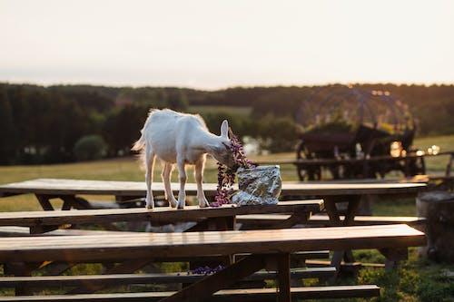 公園, 動物, 吃, 天性 的 免费素材照片