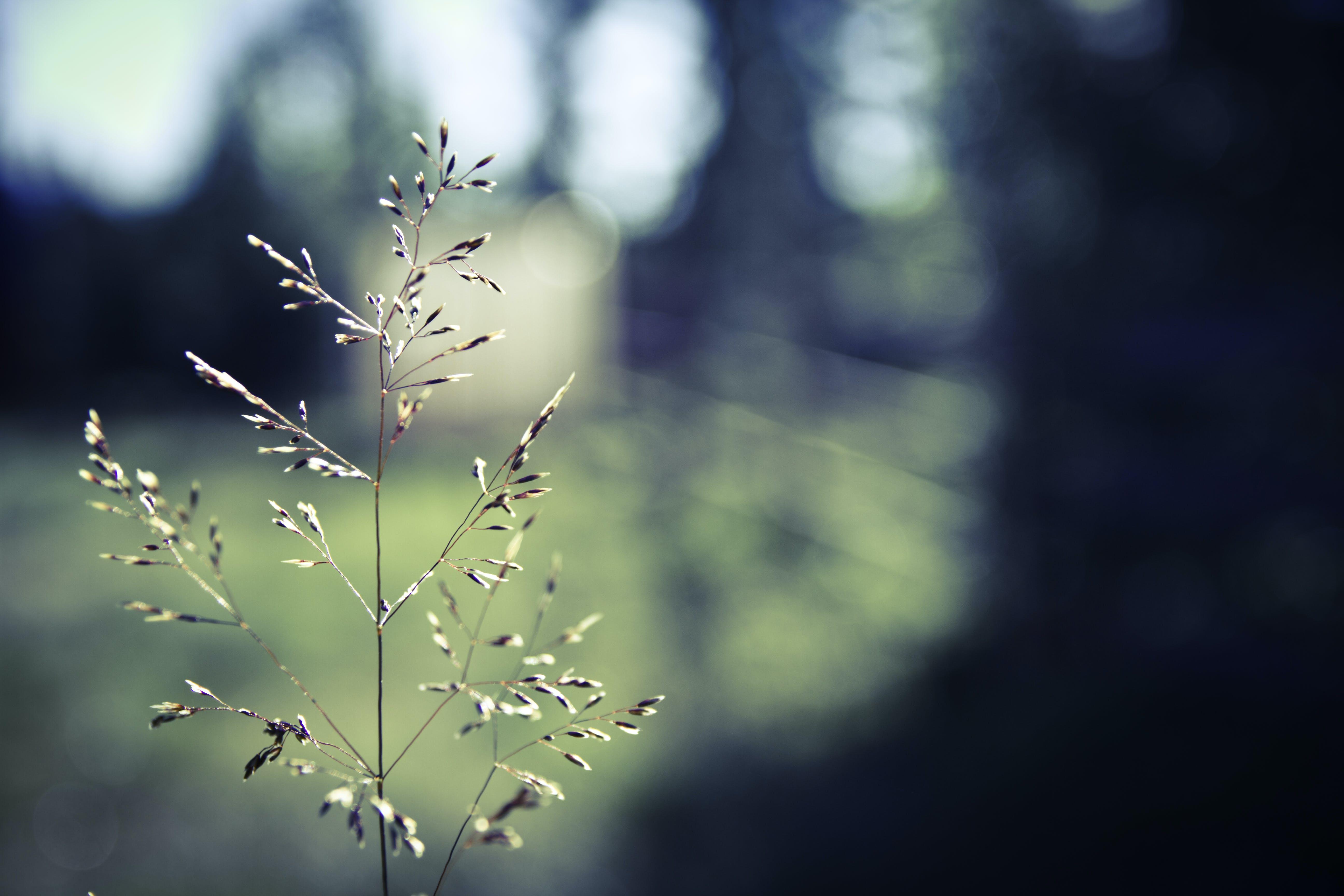 nature, straw, sun