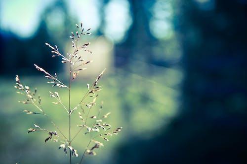 Free stock photo of nature, straw, sun