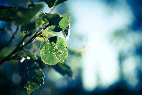 Free stock photo of branch, leafe, nature