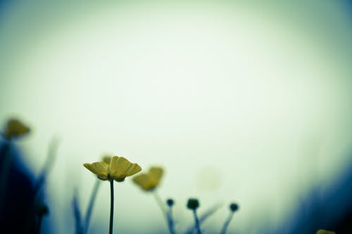 Free stock photo of cloudy, flower, misty