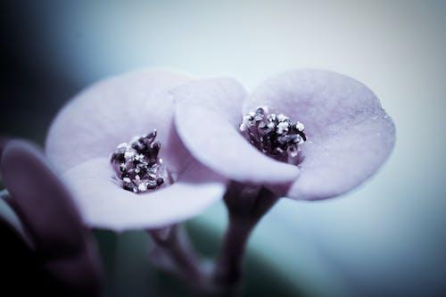 Δωρεάν στοκ φωτογραφιών με macro, ανθίζω, βιολέτα, λουλούδι