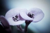 flower, macro, bloom