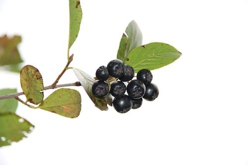 Imagine de stoc gratuită din agricultură, băcănie, fructe, fructe de padure