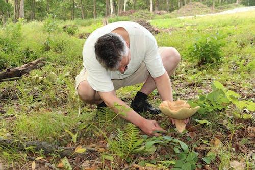 Imagine de stoc gratuită din adunare, boletus badius, ciuperci, ciuperci de pădure