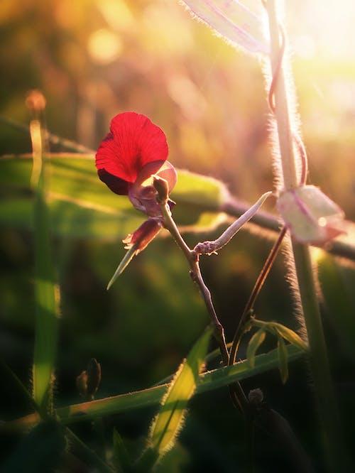 Free stock photo of backlit, field, flower