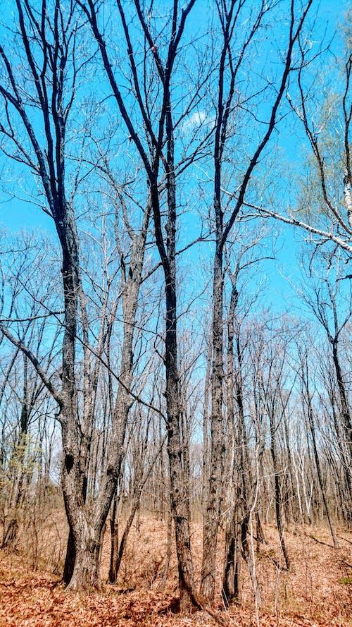 Imagine de stoc gratuită din albastru, arbori, arc, botanică