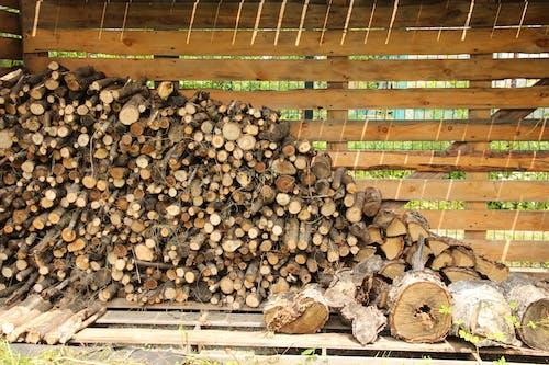 Imagine de stoc gratuită din arbori, buștean, cherestea, copaci
