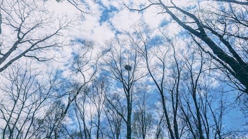 Imagine de stoc gratuită din albastru, arbori, arc, cer