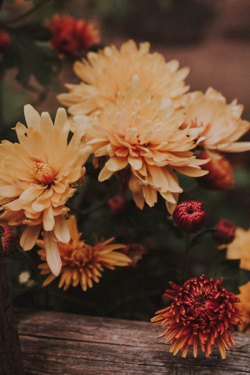 Yellow and Red Flowers in Tilt Shift Lens