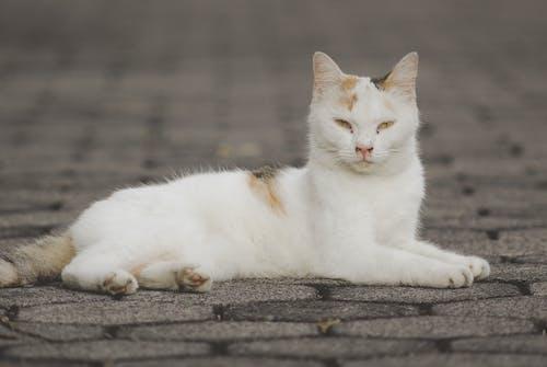 White and Orange Cat Lying on Concrete Floor