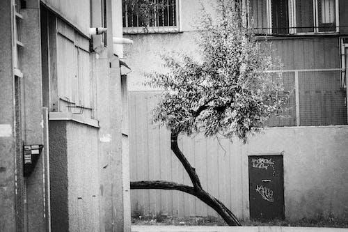 barrio, kapüşon, kaput, kukuleta içeren Ücretsiz stok fotoğraf