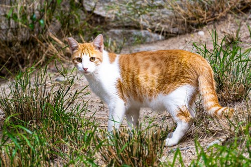 kedi, sokak kedisi içeren Ücretsiz stok fotoğraf