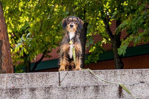 köpek içeren Ücretsiz stok fotoğraf