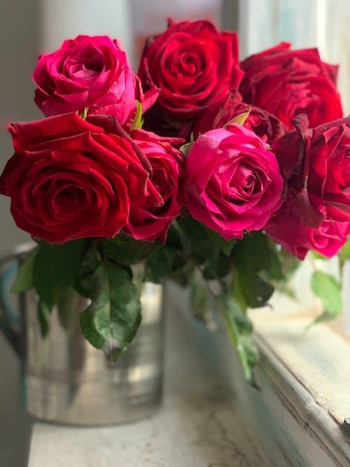 粉紅玫瑰, 紅玫瑰, 花, 花卉 的 免费素材图片
