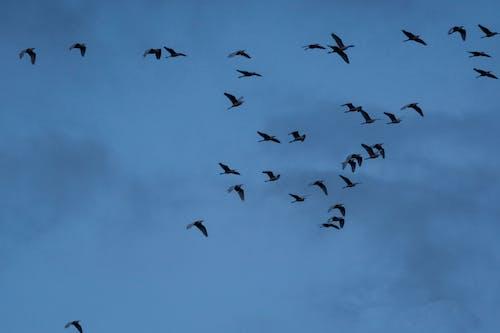 Kostnadsfri bild av fåglar