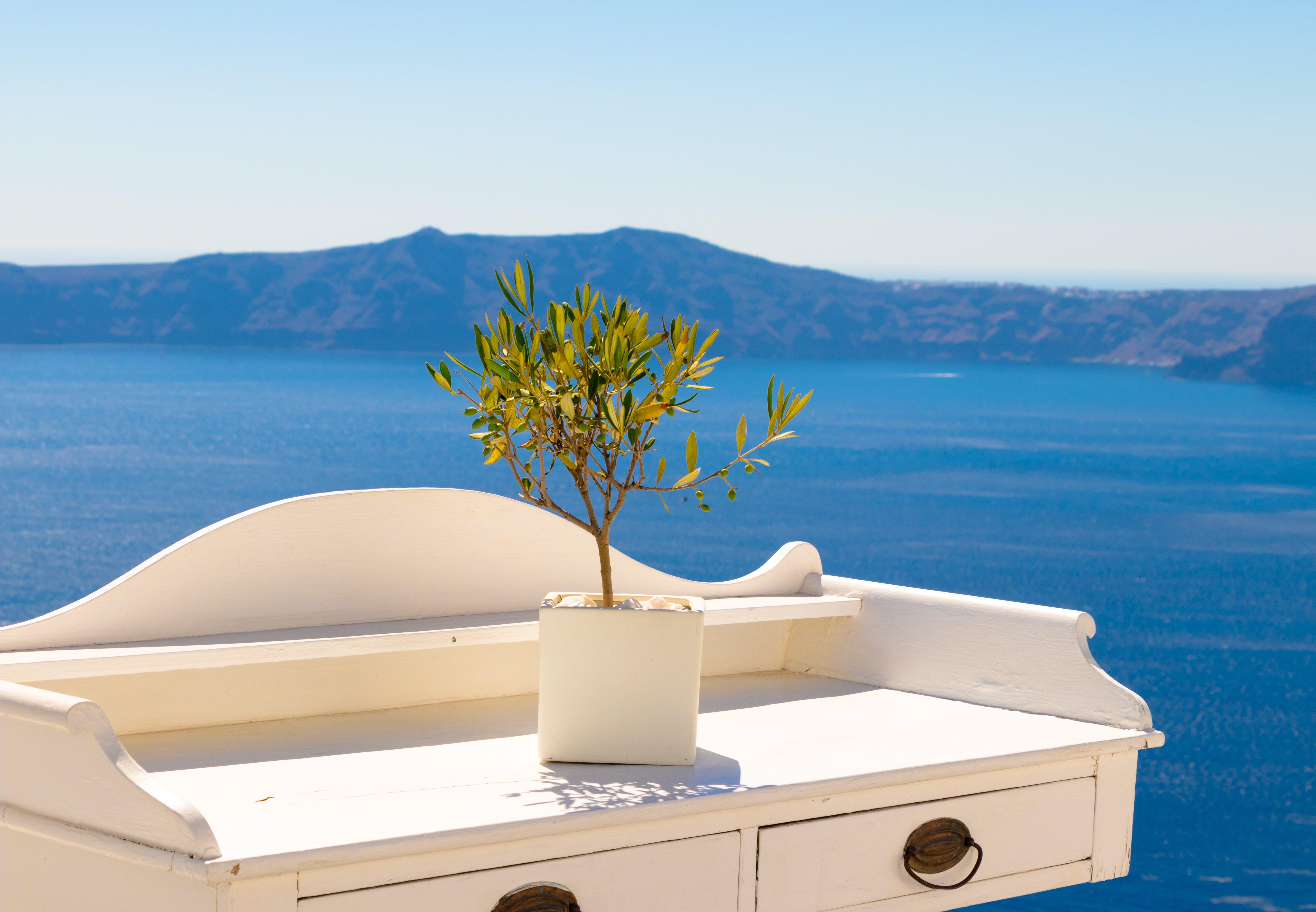 Gratis lagerfoto af bjerg, blomst, desktop tapet, Grækenland