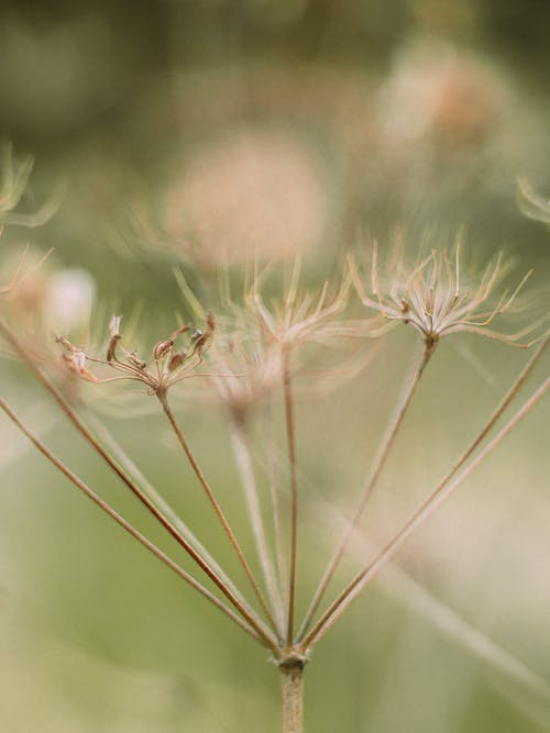 Thin dried flower in forest