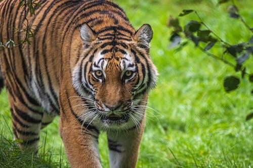 ひげ, 動物, 動物の写真の無料の写真素材
