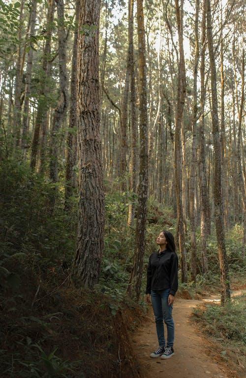 Základová fotografie zdarma na téma holka, les