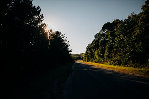Straight roadway among lush green forest in sunlight