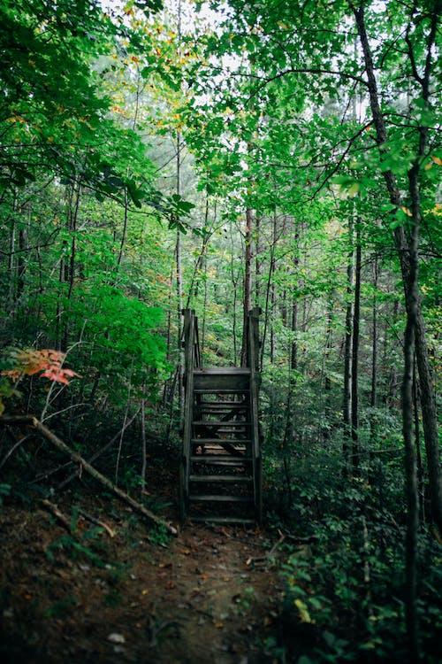 Old stair bridge in green woods