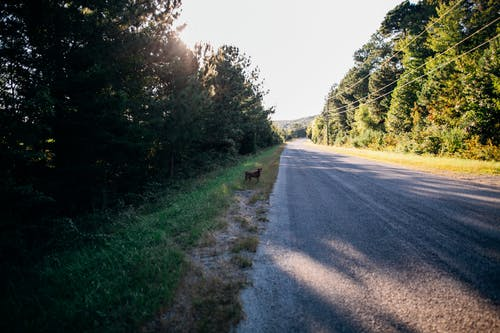 Dog standing near road going through forest in daylight