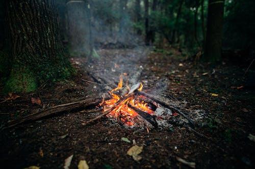 Photos gratuites de angle élevé, arbre, ardent