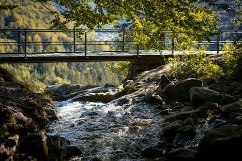 Foto d'estoc gratuïta de a l'aire lliure, caminant, cascada