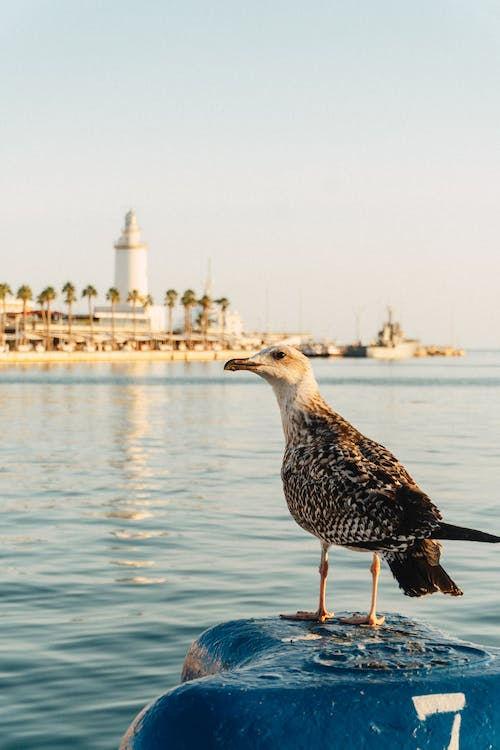 Seagull with brown plumage sitting on blue float near water surface in harbor against coast of city in daytime outside