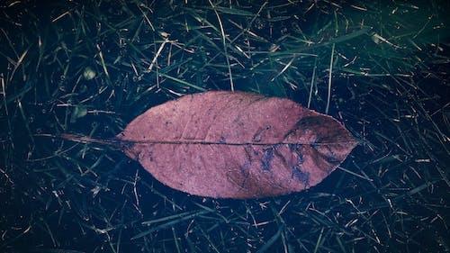 Kostnadsfri bild av blad, falla, fallblad, fallna löv