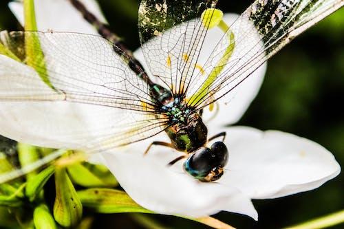 Ảnh lưu trữ miễn phí về ảnh chụp màn hình, chuồn chuồn, Con bướm, côn trùng
