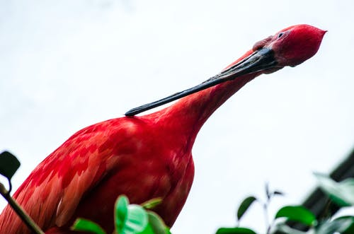 Free stock photo of canada zoo, flamingo, toronto flamingo