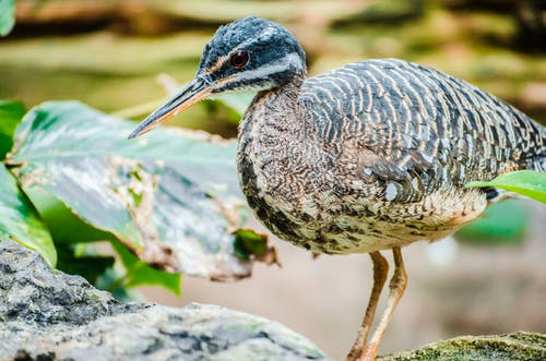 Free stock photo of bird, bird photography, toronto zoo